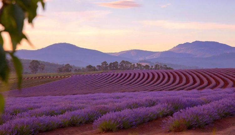 Tasmania điểm đến được thiên nhiên ưu đãi