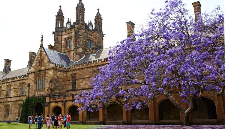 Trường đại học ở thành phố