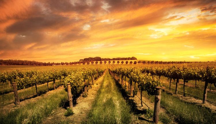 Thung Lũng Barossa nơi trồng nho lớn nhất Úc